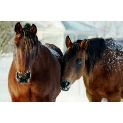 Paardenapotheek