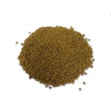 Fenegriek ( Trigonella foenum - graecum )