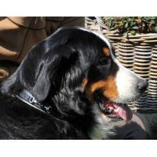 Hondenhalsband leder -Bit-