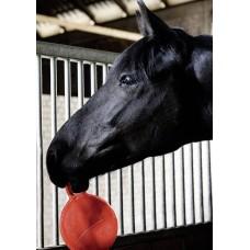 Paardenspeelbal