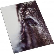 Postkaart - Paarden impressions- 3D